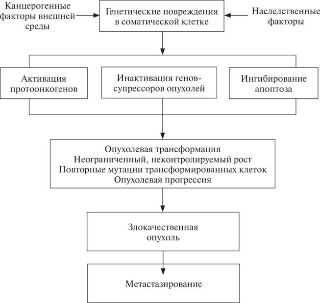 Механизмы канцерогенеза