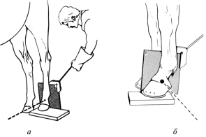 Методика снимков различных участков костно-суставного аппарата что влияет на рост суставов
