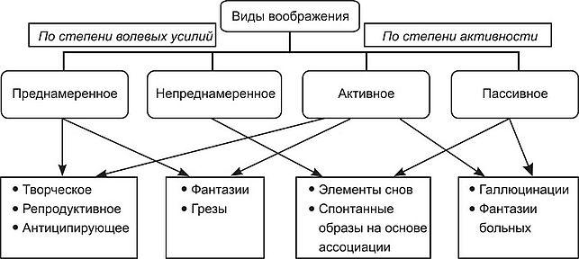 Виды воображения Основы общей психологии